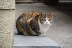 cat_example